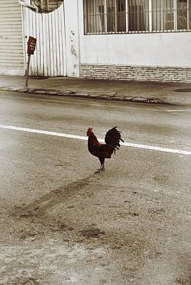 Photograph - Rooster Xing by JAMART Photography