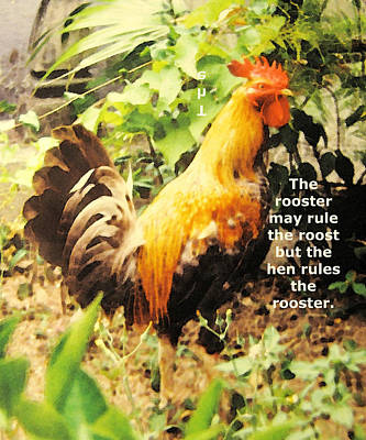 Photograph - Roosters Rule by Ian  MacDonald