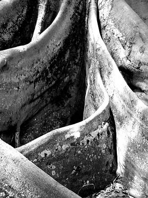 On Paper Photograph - Root Swirl by Patricia Bigelow