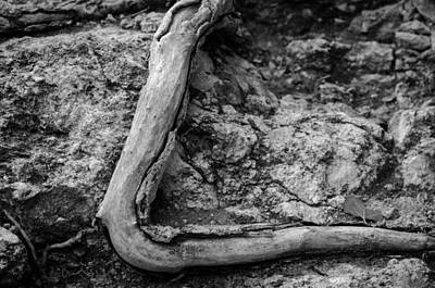 Photograph - Root Vs Rock by Jeff Phillippi