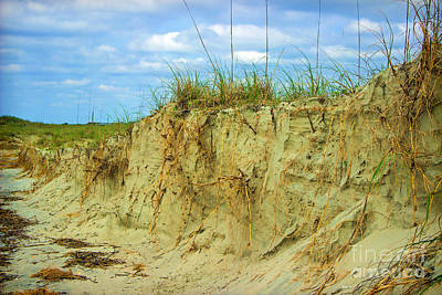 Photograph - Rooted And Grounded Sand Dunes by Roberta Byram