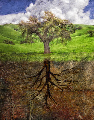 Tree Roots Digital Art - Rooted In Wood by Rick Baker