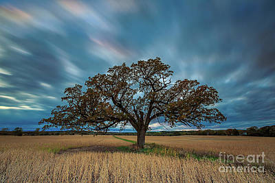 Photograph - Rooted Waukesha by Andrew Slater