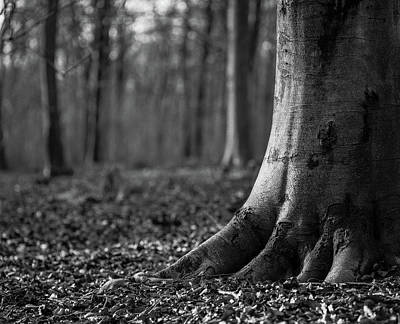 Photograph - Rooted by Will Gudgeon