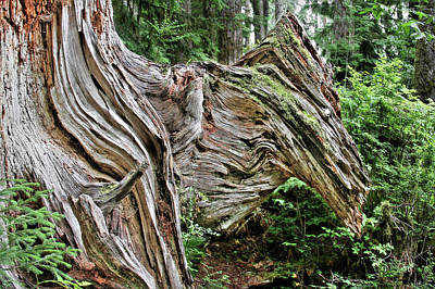 Graphics Photograph - Roots - Welcome To Olympic National Park Wa Usa by Christine Till