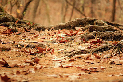 Photograph - Roots Along The Path by Joni Eskridge