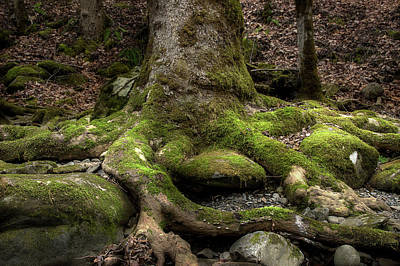 Tree Roots Photograph - Roots Along The River by Mike Eingle