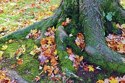 Photograph - Roots And Leaves by Cynthia Guinn