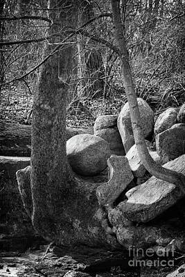 Photograph - Roots And Rocks Black And White by Karen Adams