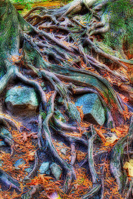 Roots And Rocks Art Print