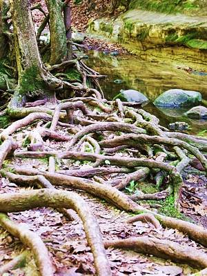 Photograph - Roots And Rocks I by Anna Villarreal Garbis