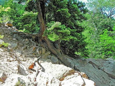 Photograph - Roots And Rocks Photo by David King