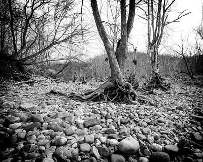 Photograph - Roots And Stones by Alan Raasch
