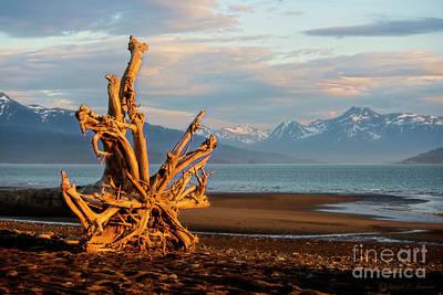 Photograph - Roots At Sundown by David Arment