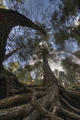 Tree Roots Digital Art - Roots by Bryan Hochman