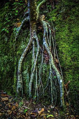 Photograph - Roots by Chuck De La Rosa