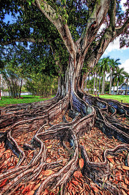 Figtree Photograph - Roots by David Lane