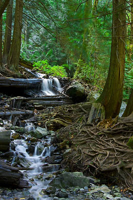 Tree Roots Photograph - Roots by Naman Imagery