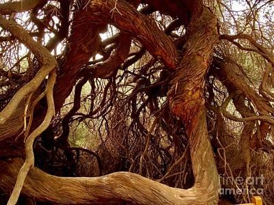 Photograph - Roots Deep by Deniece Platt