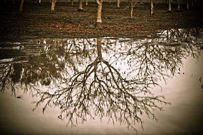 Roots Print by Derek Selander