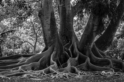Photograph - Roots Eight by Susan Molnar