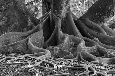 Photograph - Roots Eleven by Susan Molnar