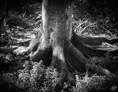 Photograph - Roots by Elie Wolf