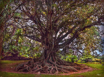 Photograph - Roots by Hanny Heim