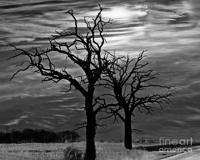 Photograph - Roots In Black And White by Kathy M Krause