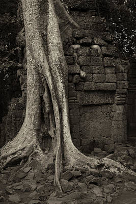Photograph - Roots In Ruins 1, Ta Prohm, 2014 by Hitendra SINKAR
