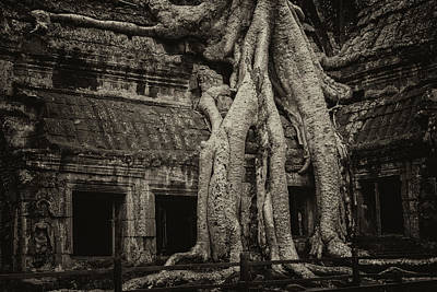 Photograph - Roots In Ruins 3, Ta Prohm, 2014 by Hitendra SINKAR