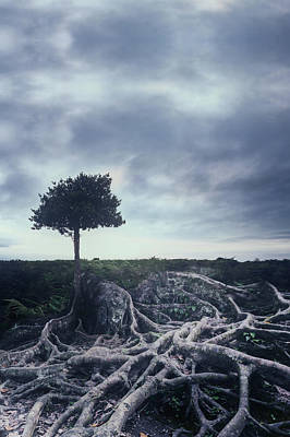 Tree Roots Photograph - Roots by Joana Kruse
