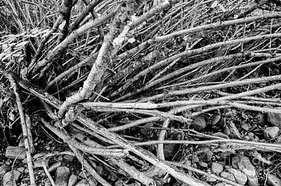 Photograph - Roots by Leonardo Fanini