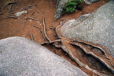 Photograph - Roots by Lynda Lehmann
