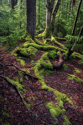 Photograph - Roots by Michael Donahue