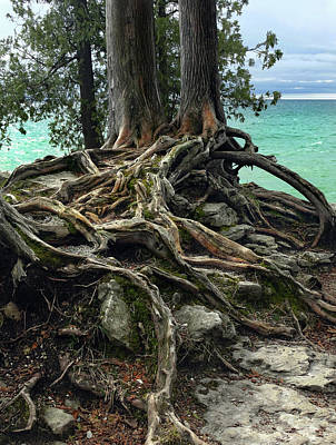 Photograph - Roots Of The Rocks by David T Wilkinson