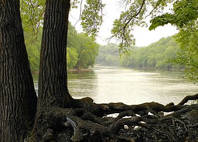 Tree Roots Photograph - Roots On The Mississippi by Jim Hughes