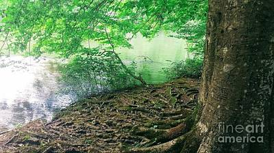 Photograph - Roots On The River by Rachel Hannah