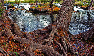 Tree Roots Painting - Roots On The River by Stephen Anderson