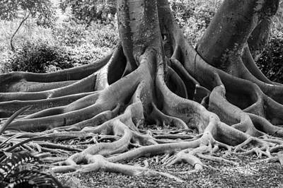 Photograph - Roots Seven by Susan Molnar