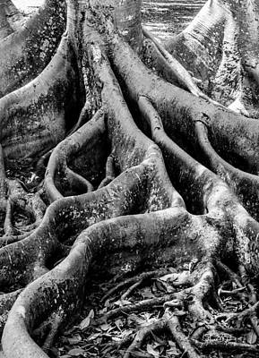 Photograph - Roots by Susan Molnar