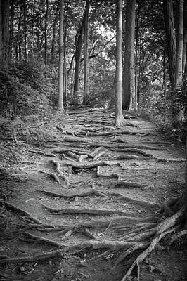 Warner Park Photograph - Roots by Tim Nichols