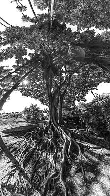 Photograph - Roots To Roof by Scott Campbell
