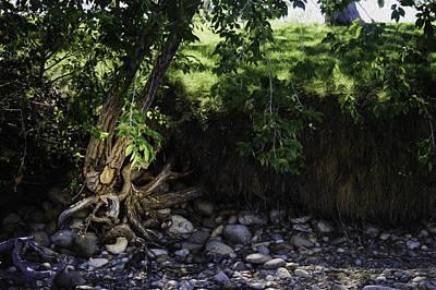 Tree Roots Digital Art - Roots by Tonya Doughty