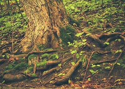 Photograph - Roots  by Viviana  Nadowski