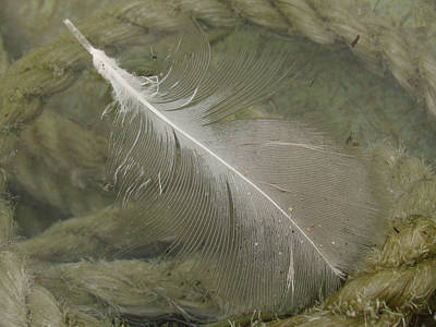 Rope And Feather Original by Juergen Roth