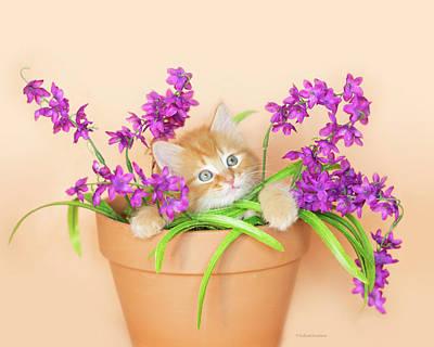 Photograph - Rory Kitten In Flowerpot II by Kelly Richardson