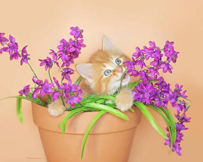 Photograph - Rory Kitten In Flowerpot by Kelly Richardson