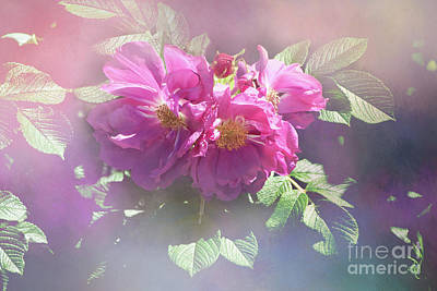 Digital Art - Rosa Rugosa Shining Through by Victoria Harrington