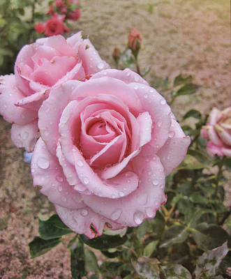 Photograph - Rosado Rosas by Jamart Photography